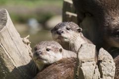 Tamar Otter Sanctuary